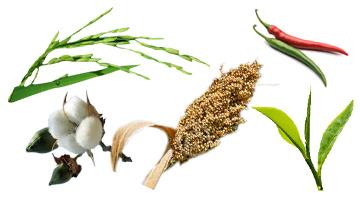 commercial crop cultivators
